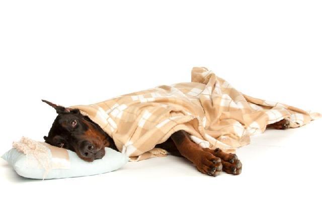 pneumonia-cachorros