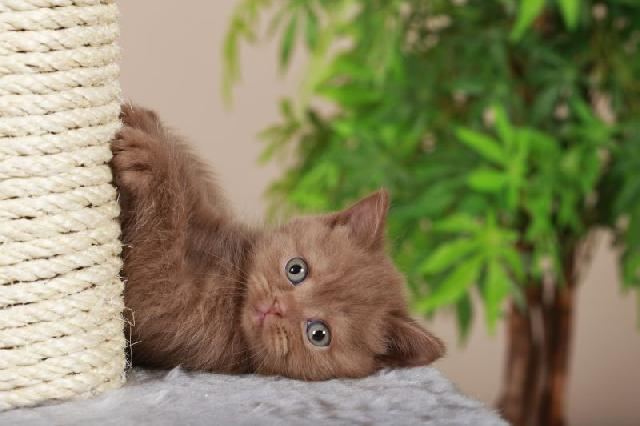 problemas-gato