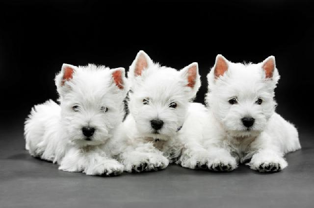 Projeto de lei proibe testes animais é aprovado na Câmara