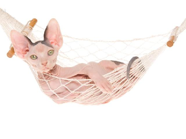 protetor-solar-para-gatos