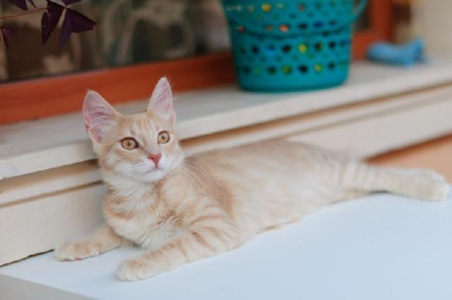 Socorro para queda de cachorro ou gato