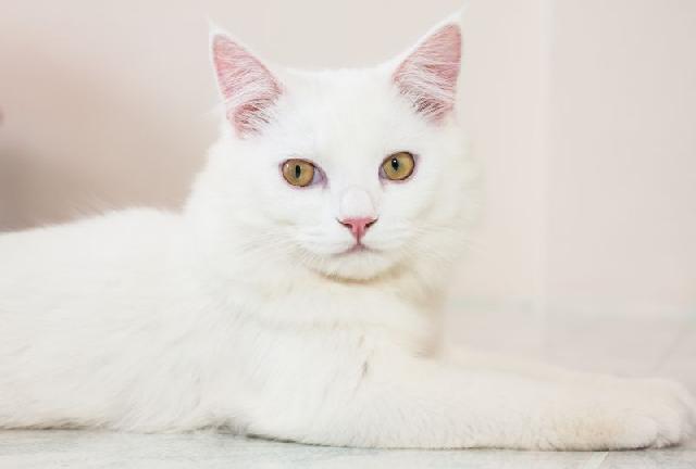 Socorro em casos de reação alérgica em cães e gatos