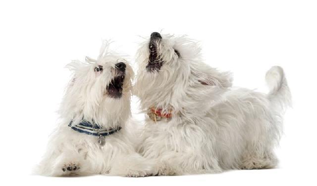 Reação alérgica em cães e gatos