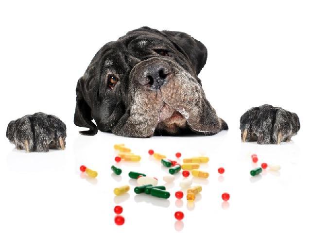 remedios-para-cachorros