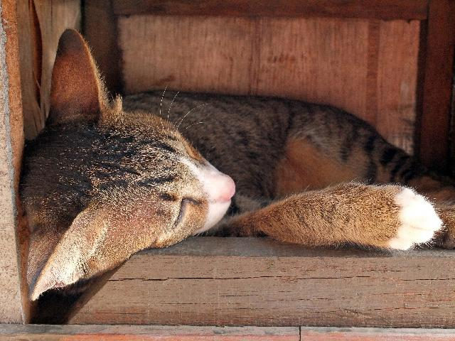 Como Aplicar Remédios para Gatos