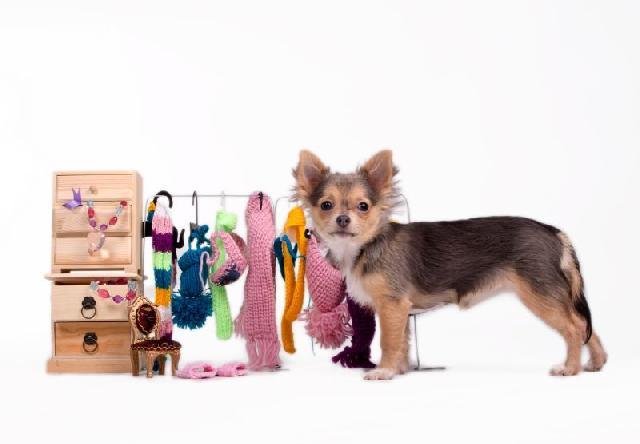 Roupas para Cães