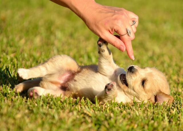 Os cuidados para sair com seu filhote canino ou felino na rua