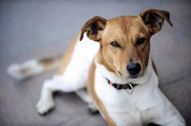 sangue-urina-caes