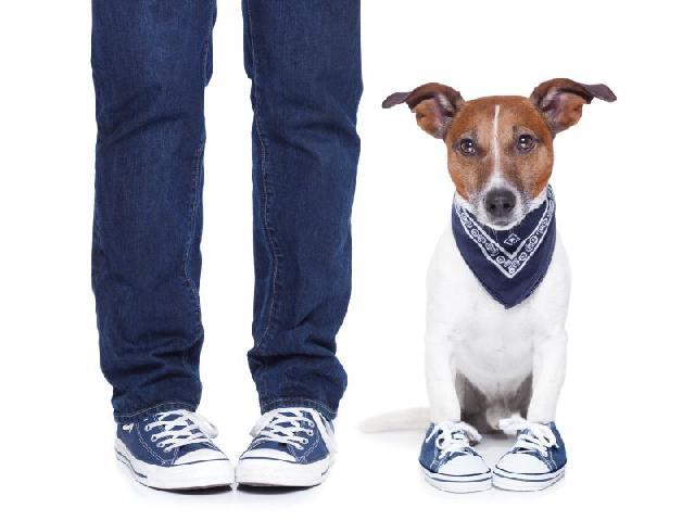 Sapatinhos para Cães