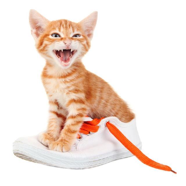 Sapatos para Gatos