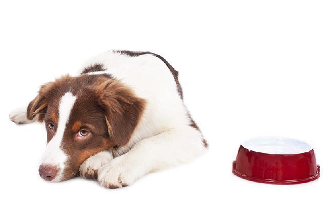 remedio para dor de ouvido de cachorro