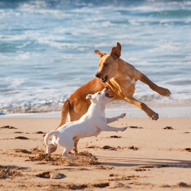 socializacao-cachorros
