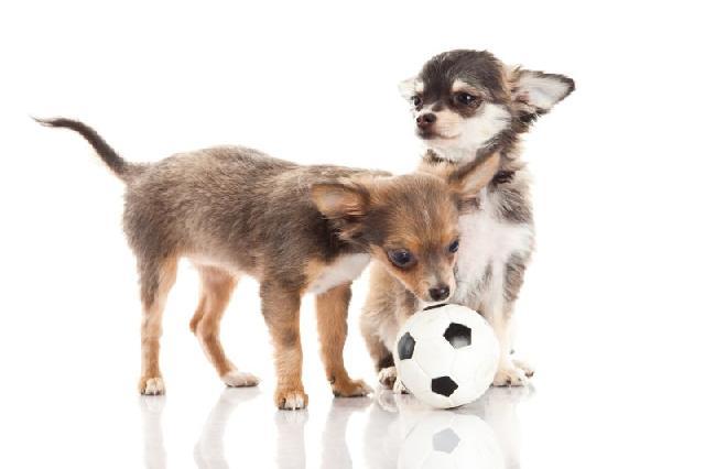 socializar-cachorros