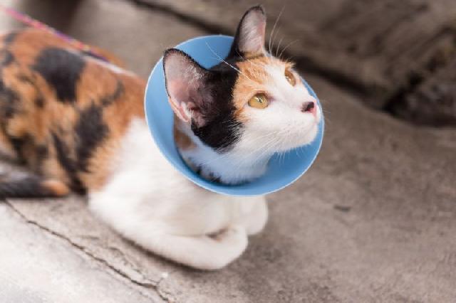 sociedade-protetora-animais-gatos