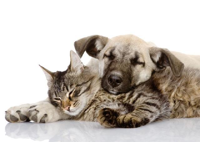 sociedade-protetora-animais