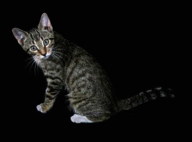 suf-gatos