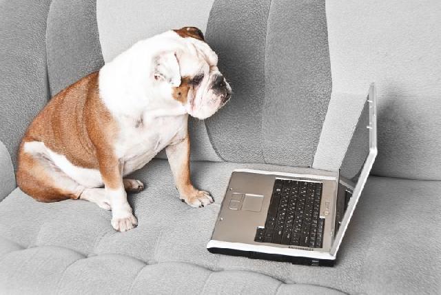 tecnologia-canina