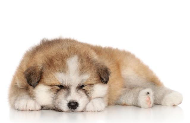 Terapia intensiva para cães e gatos