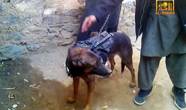 Terroristas com o cão refém