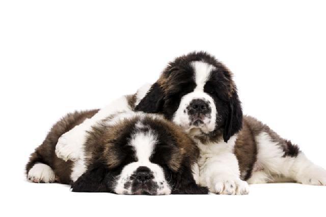 Tinder canino