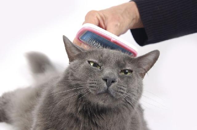 tipos-pelagem-gatos