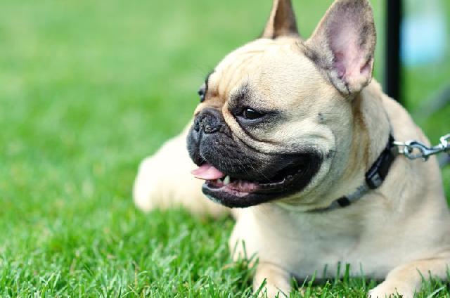 traumas-cachorros