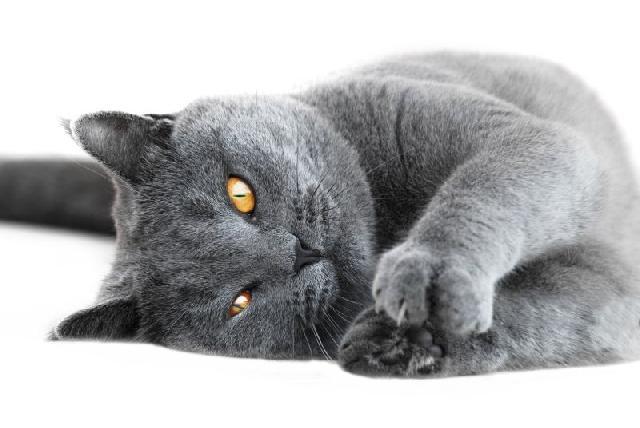 unhas-gato