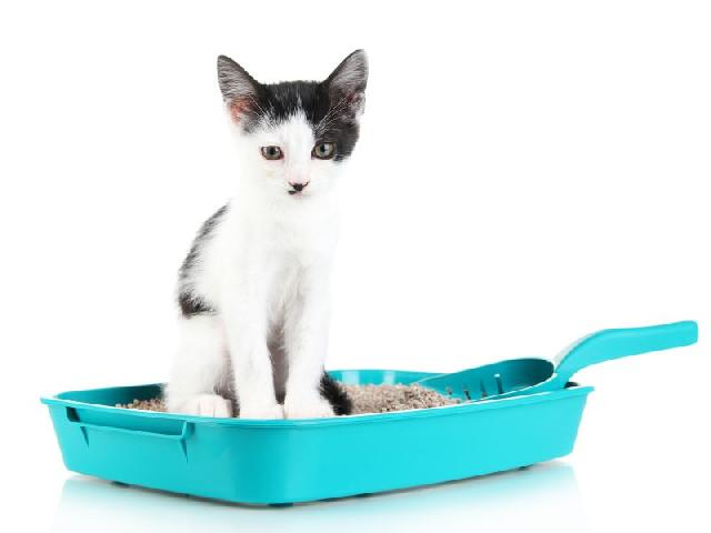 vermifugos-para-gatos