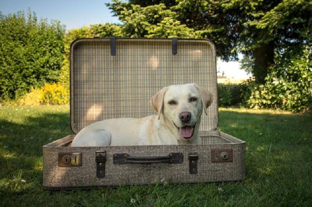 viajar-com-cachorro