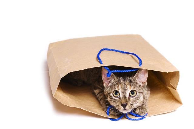 A vida secreta dos felinos