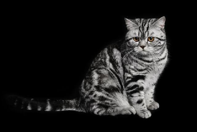 Estudo desvenda mistérios da vida dos gatos