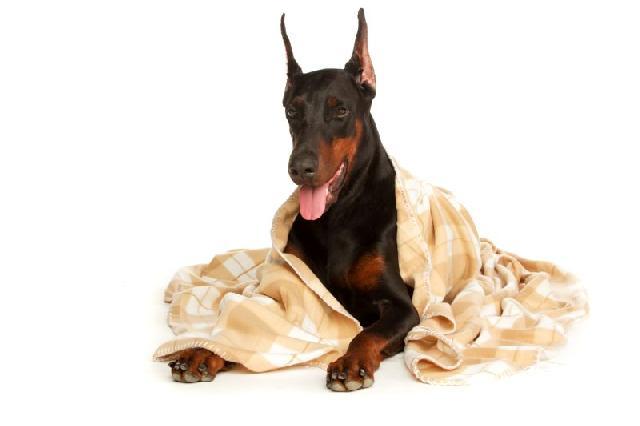 virose-canina-como-cuidar
