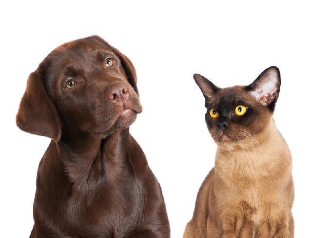 Cães e gatos enxergam luzes ultravioleta