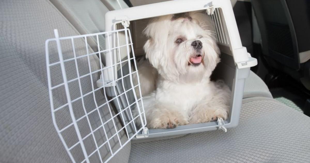 Resultado de imagem para caixa de transporte para cachorro carro