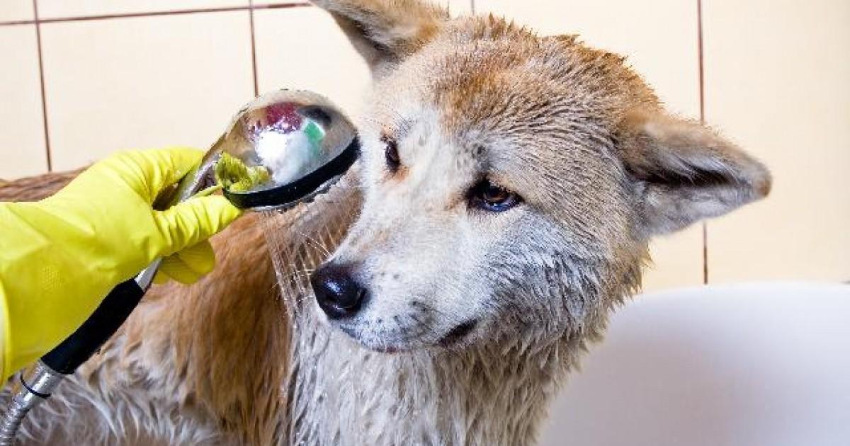 Banho e Tosa de C u00e3es   CachorroGato