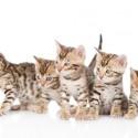 Estou com filhotes de gato com 3 semanas de vida, quando posso iniciar a alimentação com ração? E qual ração