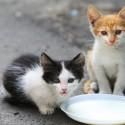 Adotei um gato de 2 meses, nos primeiros 2 dias dei leite mas agora ele começou a ter diarreia.
