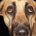Meu cachorro está urinando com sangue já faz alguns dias, que tipo de medicação pode ser usada neste caso?