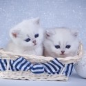 O que posso usar como anti-pulgas para um filhote de gato de um mês de idade?
