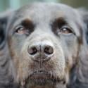 Minha cadela SRD de 2 anos está descascando em volta do nariz e dos olhos. Pode ser câncer?