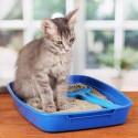 Tenho dois gatos, quantas caixas de areia preciso ter em casa?