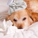 Meu cachorro dorme demais e fica muito tempo parado. Ele pode estar doente?