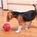 Tenho um beagle e ele esconde tudo o que encontra, como posso fazer para melhorar isso?