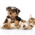 Existe convulsão em cães e gatos?