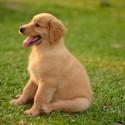 Adotei um cachorro há três meses e ele ainda não é vacinado. Ele iniciou um quadro de comportamento estranho, ataques semelhantes à convulsão, fica tremendo, anda para trás e baba. O que pode ser?