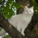 Tem um gato em cima da árvore na minha rua, o que eu posso fazer?