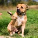 Tenho um cachorro em perfeitas condições de saúde. Toma banho duas vezes por semana, mas não consigo cortar as unhas dele. O que fazer?