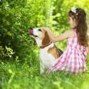 Meu cão não para de lamber a pata. Dizem que pode ser emocional, mas damos todo o carinho para ele, o que fazer?