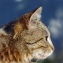 Minha gata está com pintas pretas abaixo da orelha e nesse local há pouco pêlo. O que pode ser? Obrigada desde já!