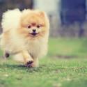 Eu gostaria de saber qual é a raça de cães de pequeno porte que mais gosta de receber e dar amor e carinho?
